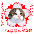 This is a cat photo sticker.Second.2nd.