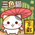 京都三色貓