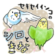 Sekisei parakeet's Shiro and Kina
