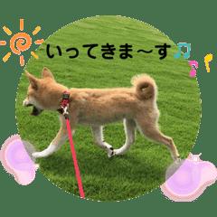 柴犬ふくの日常スタンプ第2弾♪♪