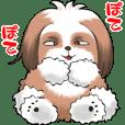 Kintaro dog