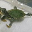 Tortoise-Family 2