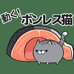 Moving Plump cat