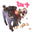 Miniature Schnauzer's Sticker