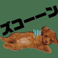 ベルたんぷ②