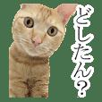 ネコ好きのためのかわいい茶トラ猫スタンプ