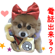 Real DOG Cosplay Pomeranian DUFFY