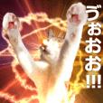 【魔猫が】キャットファンタジー【動く!!】