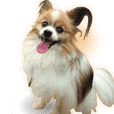 Picture of Papillon realistic