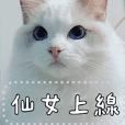 小翠花小姐 不要動!