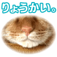 Real cat ! MIKAGE & CHAR Sticker 2