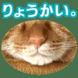 リアルにゃんこ!みかげ & チャー 2