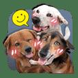 Dogs Leela