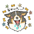 The sticker of tricolor welsh corgi.