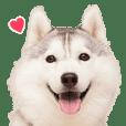 OSHIRU Sticker