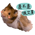 鼠寶發電廠不買可惜篇