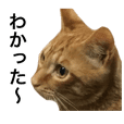 It is a sticker of a cat's Kinchan