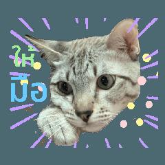 Satomi_20210121170314
