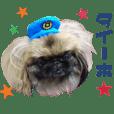 Real DOG Pekingese & friends