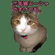 ミケ猫ミーシャのにちじょう
