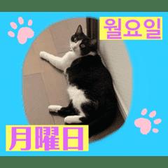 韓国語付き日本語