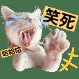 不死兔的貓貓-露娜與米米超愛演