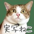 maru sweet cat
