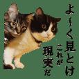 otaku real cat