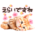 Cat Photo Stickers 09