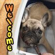 French bulldog MAKOTO Sticke01