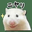 Expressive hamsters Piitan's sticker