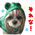 Real DOG Shih Tzu -Seira-