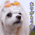 Meichan LINE sticker No.2