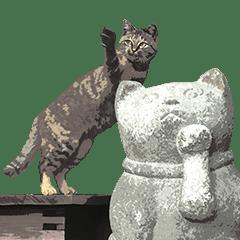 """Mitsuaki Iwago's """"Cats in Kyoto"""" Sticker"""