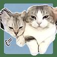 Syakotan & Fuwarin & Hugh & Rin