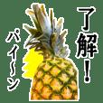 Pineapple pineapple