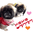 Real DOG Pekingese2