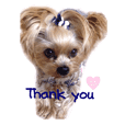 A cute dog sticker ( Yorkshire terrier )