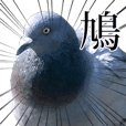 moves! Wild pigeon (real)