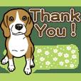 Wanko-Biyori Beagle