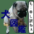 犬図鑑(日常会話)