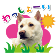 Japanese Dog WASSHOY Sticker