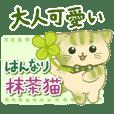 Hannari Matcha Cat2