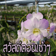 orchids thai2