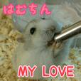 ハムスター MY LOVE