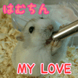 HAMUCHIN MY LOVE