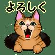 KINAKO  and KOMUGIcats