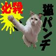 レスキュー 猫組