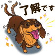 A sticker willingly. Dachshund (C&T) 2