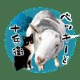 pandacco_20210131162523
